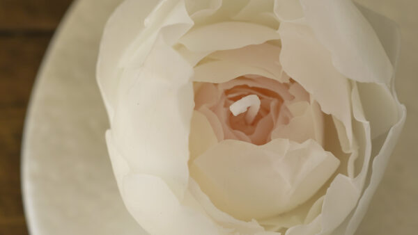 キャンドルフォトブック 『Rose』